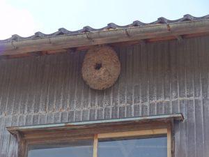 蜂の巣に 大きな穴