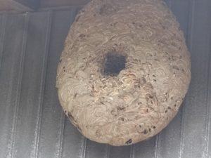 大きな蜂の巣