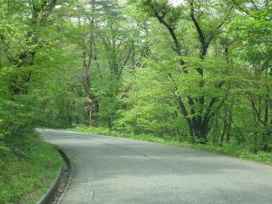 山道の新緑