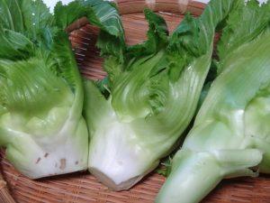 子宝菜 高菜