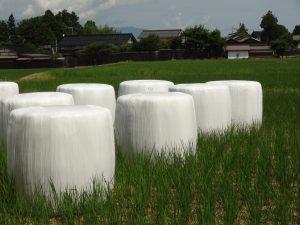 早刈りされた 青い稲