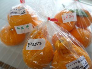 新しい柑橘