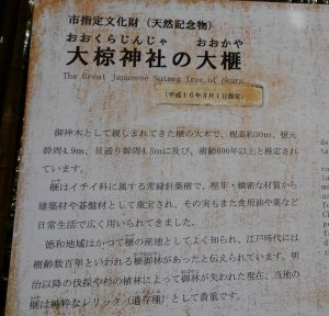 大椋(おおくら)神社 榧の木