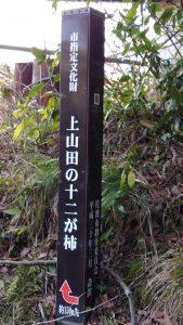 上山田 十二が柿