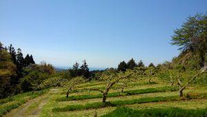 柿畑 草刈り