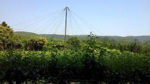 林檎 果樹園