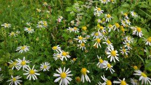 名は? 野の花