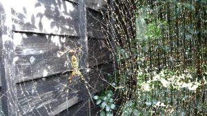 蜘蛛 ホコリまみれ