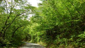 近所の 山道