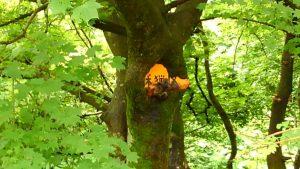 木が看板を飲み込む