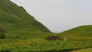 大野亀 カンゾウの花