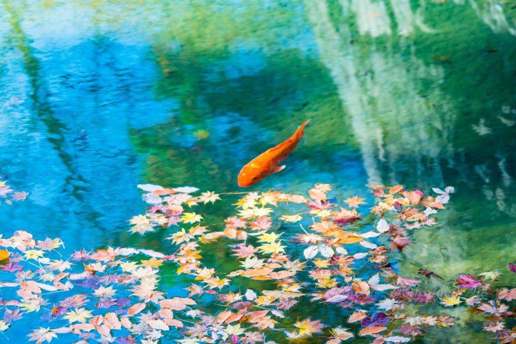 紅葉山公園の鏡池