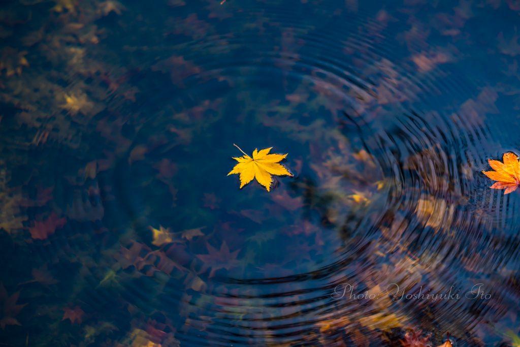落ち葉と波紋