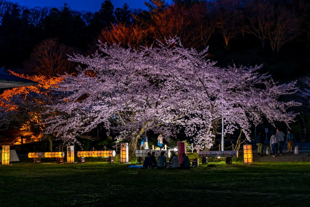 第1回真野公園桜フォトコンテスト 最優秀賞
