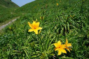 雑草の伸びが遅い分、花がくっきり見えます