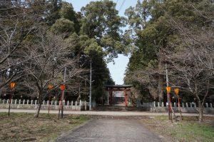 金井 八幡宮の桜