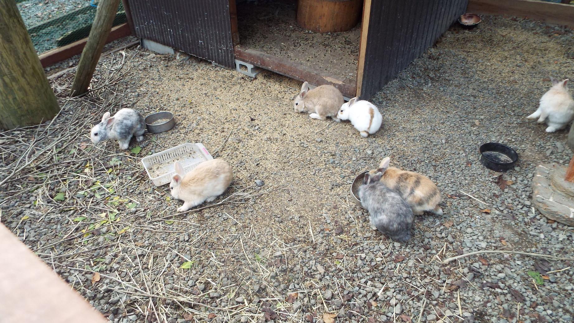 長谷寺のウサギ